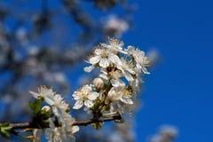 Fleur de l'arbre Image stock