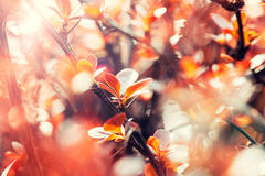 Fleur de l'arbre orange Photos stock