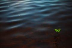 Fleur de l'eau Images stock