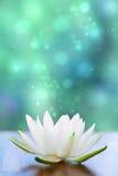 Fleur de l'eau blanche lilly Photographie stock libre de droits