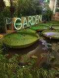 Fleur de l'eau de jardin Image libre de droits