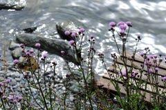 Fleur de l'eau de la terre de Beautful Image libre de droits
