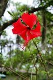 Fleur de la Floride Photographie stock