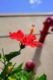 Fleur de la Floride Photographie stock libre de droits