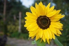 Fleur de la forêt Photographie stock libre de droits