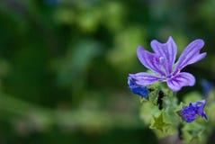 Fleur de la mer Photos libres de droits
