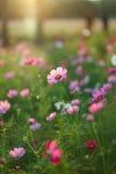 Fleur de lever de soleil Photos libres de droits