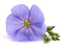 Fleur de lin textile Photos stock