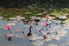 Fleur de lis photos libres de droits