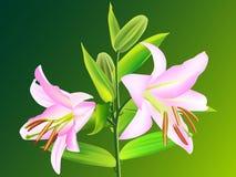 Fleur de lis Images libres de droits