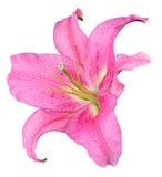Fleur de lis Image libre de droits