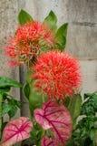 Fleur de lis d'aérolithe Photographie stock libre de droits