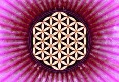 Fleur de Live Symbol - la géométrie sacrée illustration stock