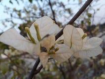 Fleur de livre blanc Photo libre de droits