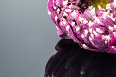 Fleur de lotus Photographie stock libre de droits