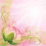 Fleur de lotus abstraite de rose de fond Photos stock