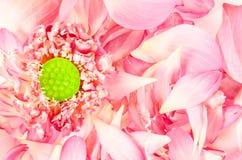 Fleur de Lotus avec des pétales de lotus Photo libre de droits