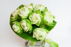 graines vertes de lotus dans la tasse de caf photo stock image 48359936. Black Bedroom Furniture Sets. Home Design Ideas