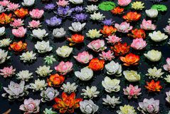 Fleur de lotus colorée en rivière Photos stock