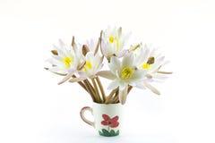 Fleur de lotus d'isolement sur le fond blanc Photo libre de droits