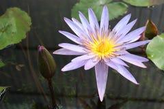 Fleur de Lotus dans la couleur de ton de vintage d'étang Photographie stock libre de droits