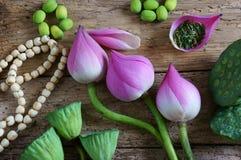 Fleur de lotus de collection, graine, thé, nourriture saine Photos libres de droits