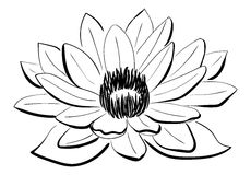 Fleur de Lotus noire et blanche de vecteur Images stock