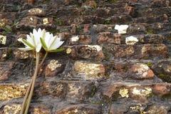 Fleur de Lotus offrant sur le stupa de l'incinération du Bouddha, Kushinagar, Inde Photographie stock