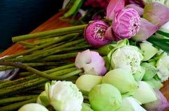 Fleur de Lotus pour prier Bouddha Photographie stock libre de droits