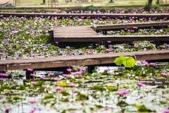 Fleur de Lotus sur l'eau Photographie stock