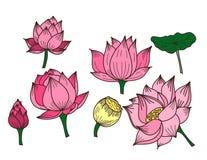 Fleur de lotus tirée par la main de cercle Image libre de droits
