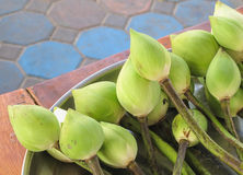 Fleur de lotus verte Images stock