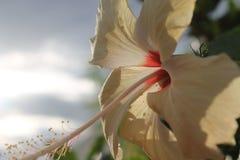 Fleur de lumière Photographie stock libre de droits