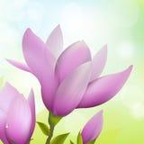Fleur de magnolia illustration libre de droits