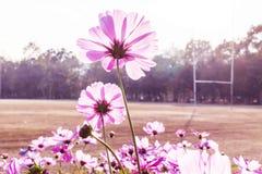 Fleur de marguerite contre le ciel bleu, Images stock