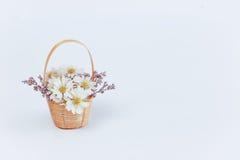 Fleur de marguerite dans un panier Image stock
