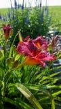 Fleur de matin photographie stock