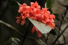 Fleur de matin Photos stock