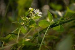 Fleur de milieux de fleur dans l'herbe Photographie stock
