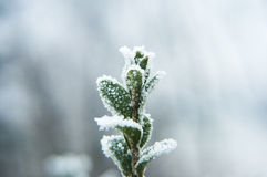 Fleur de Milou photos libres de droits