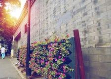 Fleur de mur de briques de coucher du soleil de la Chine Pékin Hutong Image libre de droits