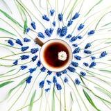 Fleur de muscari et tasse bleues de thé avec la camomille Image stock