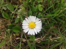 Fleur de nature Photos libres de droits