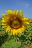 Fleur de nature Photo libre de droits
