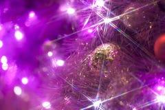 Fleur de Noël Photo libre de droits