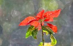 Fleur de Noël image libre de droits