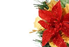 Fleur de Noël du côté Photographie stock libre de droits