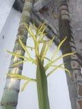 Fleur de noix de coco au moment Photos stock