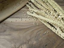 Fleur de noix de coco sur le vieux backgound en bois de table Images stock