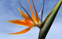 Fleur de pétales de l'oiseau Photos stock